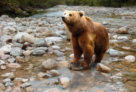 hiking safety tips bears