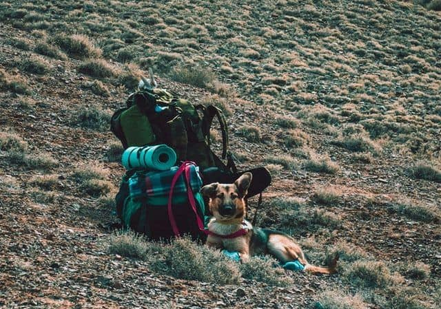 Best Dogs For Hiking And Camping