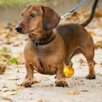 Best small dogs for hiking