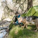 Preparing Your Dog for Hikes and Camping