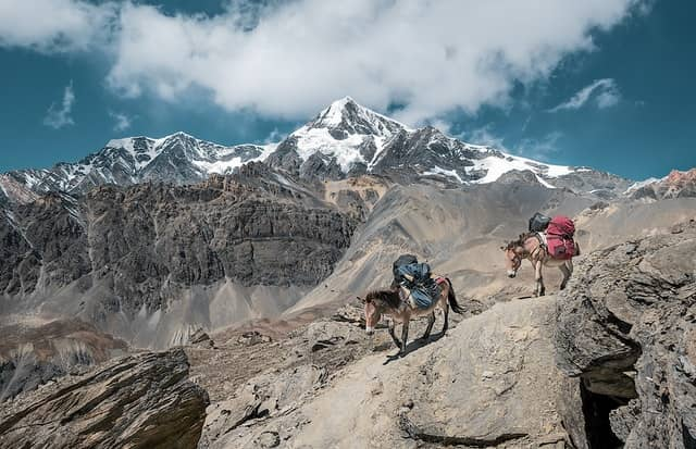 Why a Donkey is the Ideal Hiking Companion