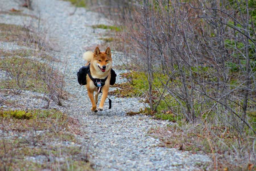 Dog Injuries That are Most Likely To Happen On A Hike
